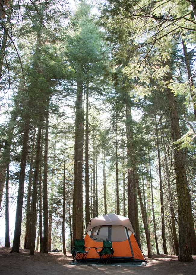 An image of a orange tent set up in a forested campground in Kings Canyon National Park.