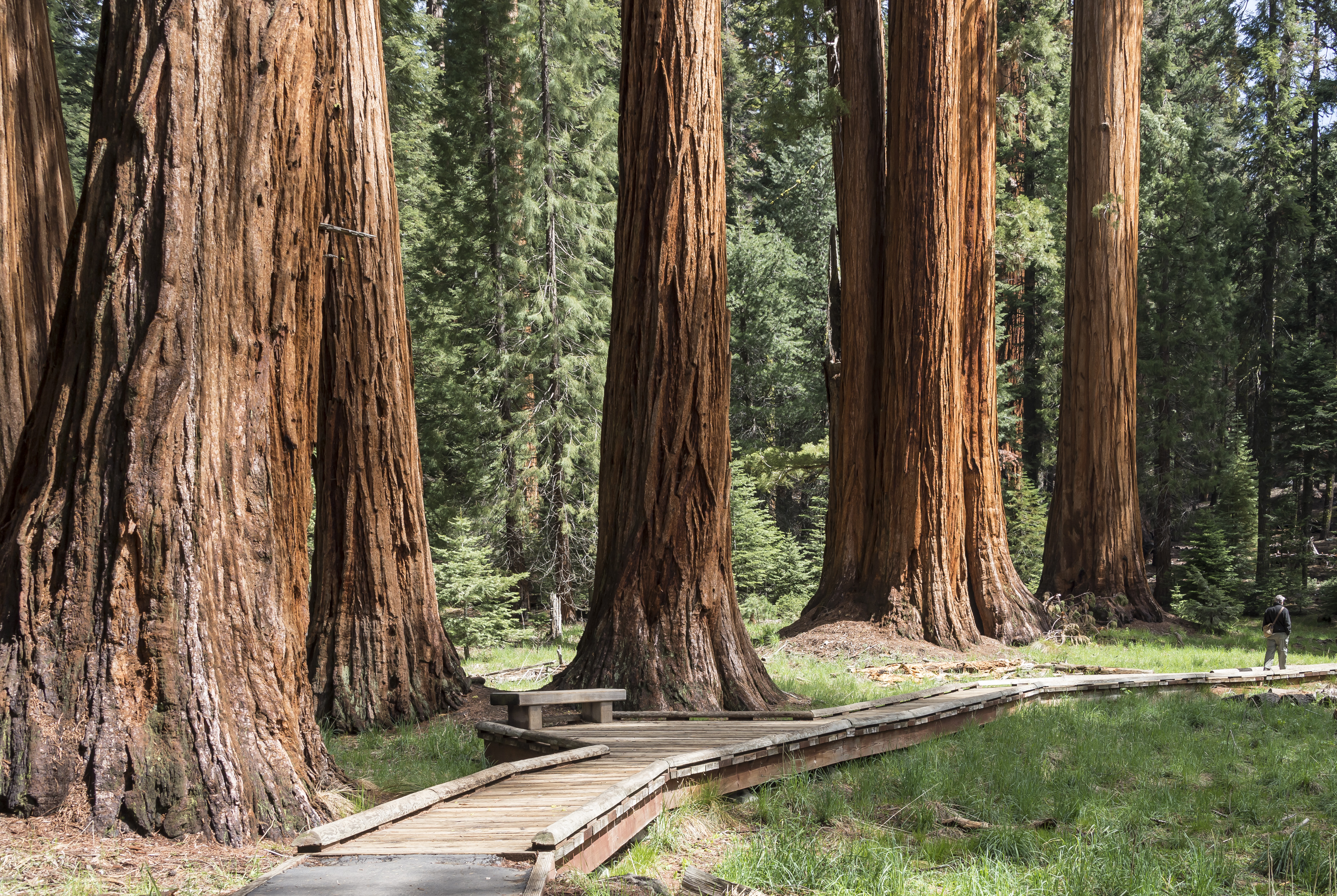 sequoia fall lowres time giant honeymoon forest with htm sequoias in california grant some kc s spend this couple cabins quiet releases national