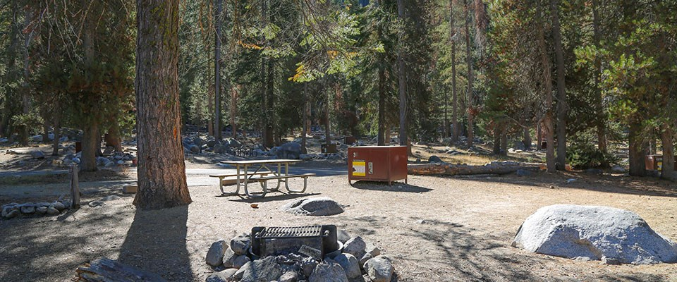 A campsite with a picnic table and metal food-storage box