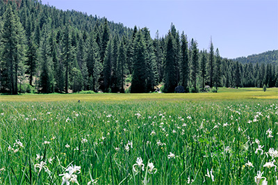 A wide meadow surrounded by forest
