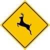Deer crossing