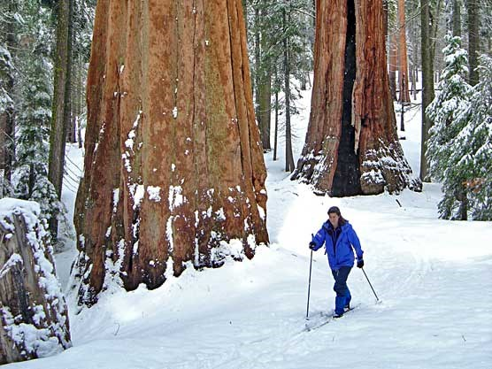 skiing-sequoias