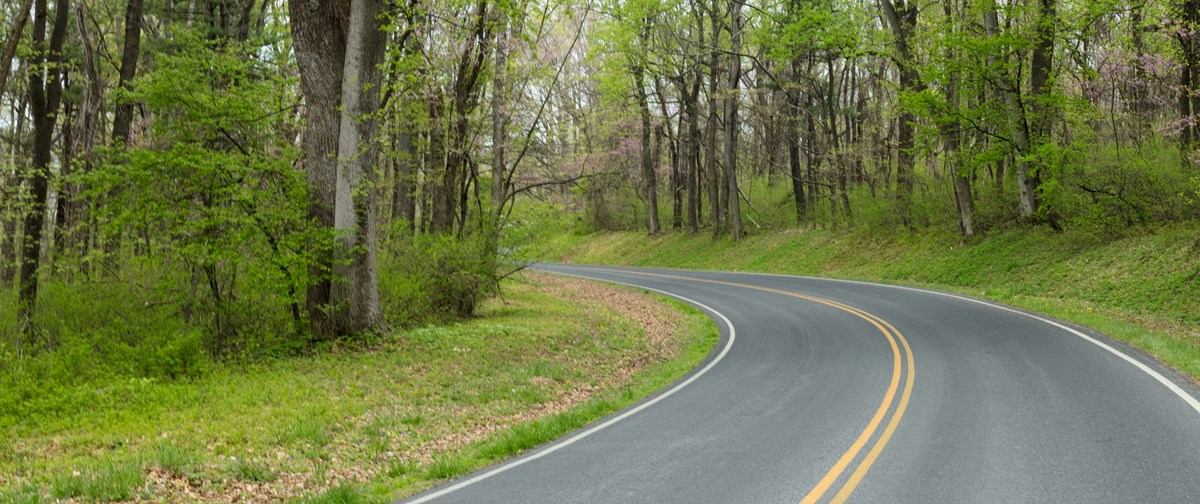 A paved road meanders underneath green trees.