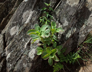 Vibrant plants trying to survive on rocky ledge.
