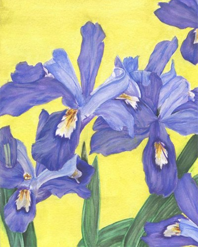 Blue irises on yellow background.
