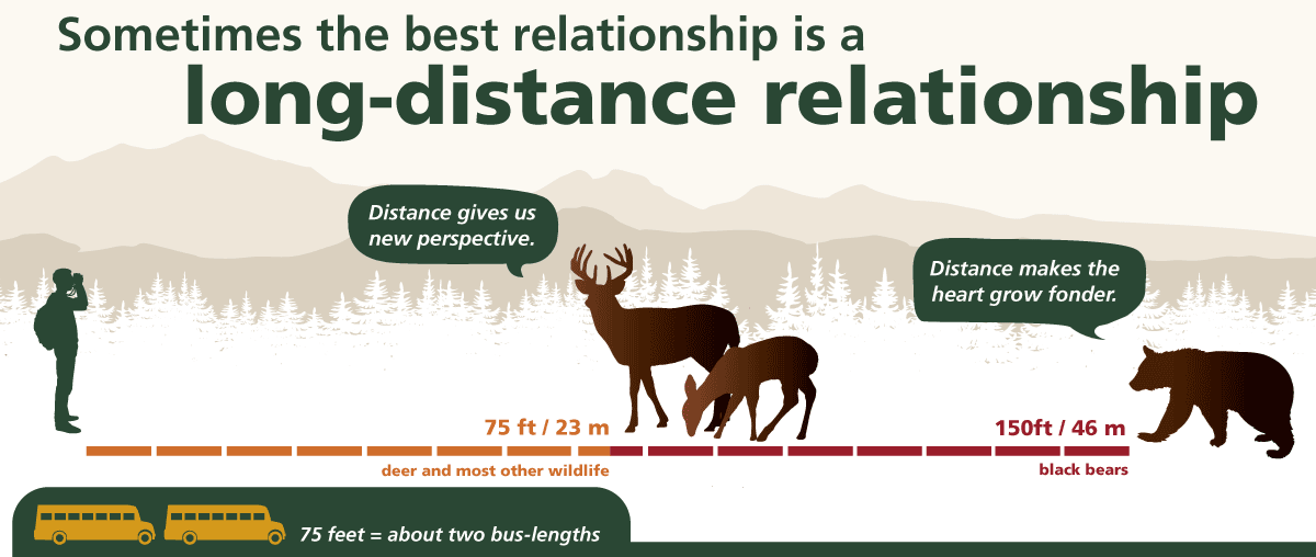 Graphic of safe distance for viewing wildlife