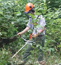 A Youth Conservation Corps worker clearing weeds at Shenandoah's Rapidan Camp.