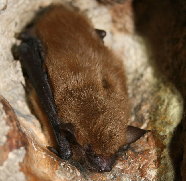 A bat sleeping in a cave