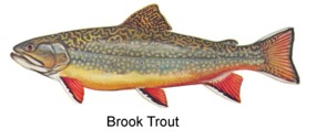 Brook trout shenandoah national park u s national park for Trout fishing in wv