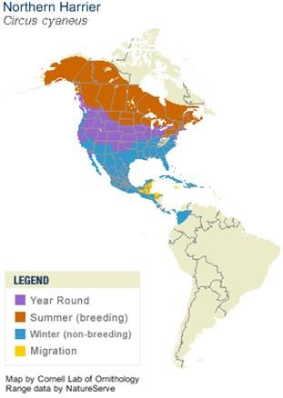 Map of North and South America color-coded for harrier habitat. Canada and most northern middle area of U.S. is brown for summer breeding; Upper north of U.S. is purple for year-round; rest of U.S. + bit of northern South America is blue for winter.