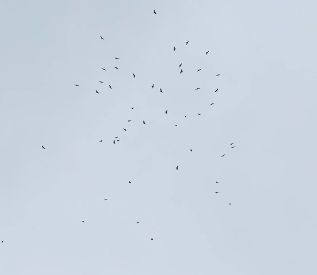 A large group of hawks circle high above in the air, appearing as black dots in the sky.