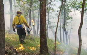 A firefighter uses a drip torch to place fire.