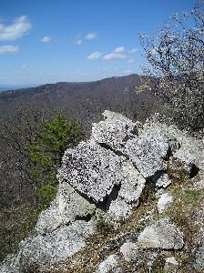 White quartzite at Calvary Rocks