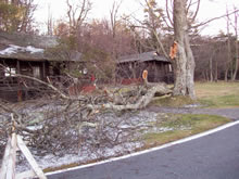Downed tree branches from a recent ice storm lay in front of historic Skyland cabins