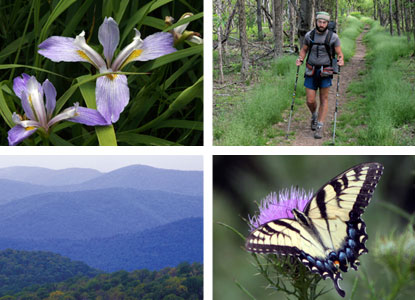 A four-photo montage of Shenandoah images.