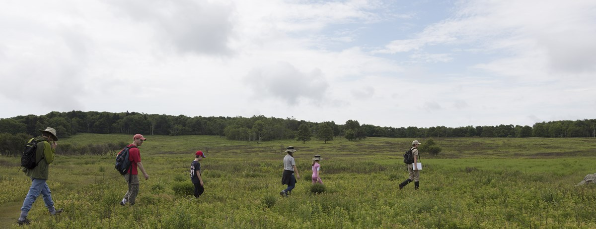 A volunteer leading a group of people into a meadow.