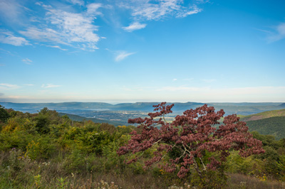 Pass Mountain Overlook on September 26, 2013 featuring a Redbud tree showing early fall colors.