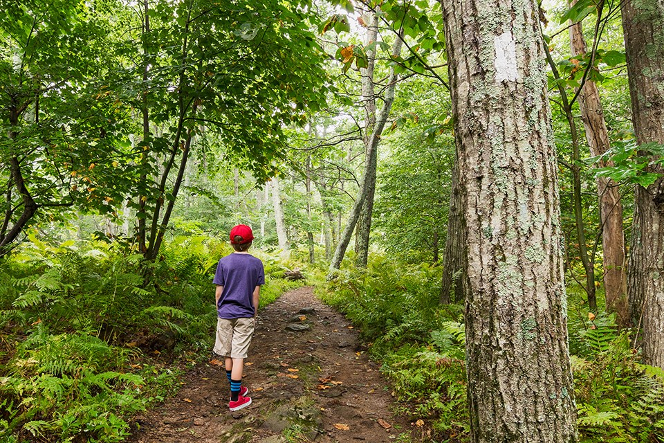 A young boy wearing a red hat descends into the forest on a the Appalachain Trail in Shenandoah National Park.