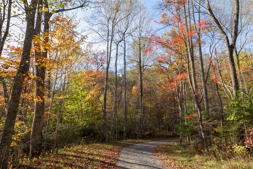 Red, Gold, Orange, And Green Trees Line Both Sides Of Gravel Road Into
