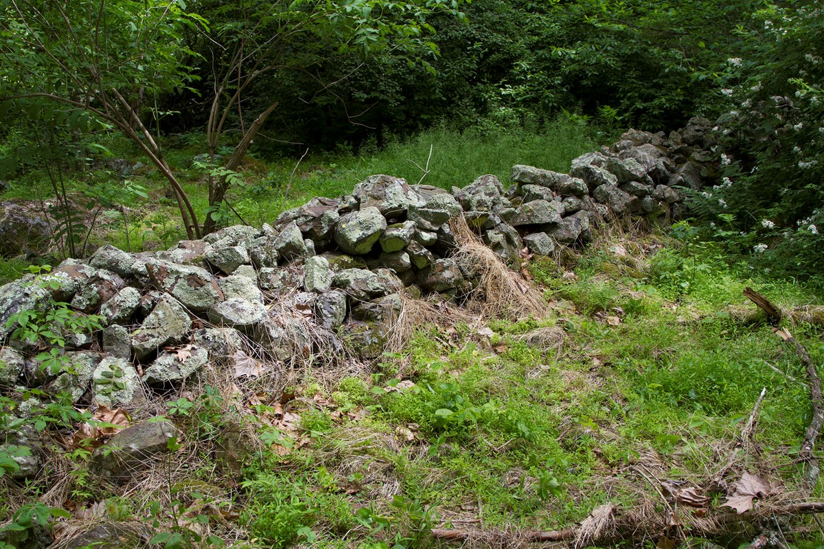 A stone wall with plant growth around it in the middle of the woods.