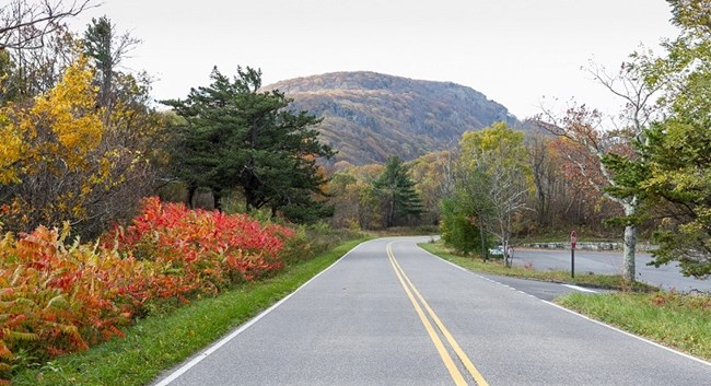 Red sumac plants beside road, with Stony Man Mountain mountain in the distance