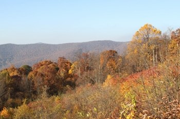 Trees starting to looses their leaves on Pass Mountain.