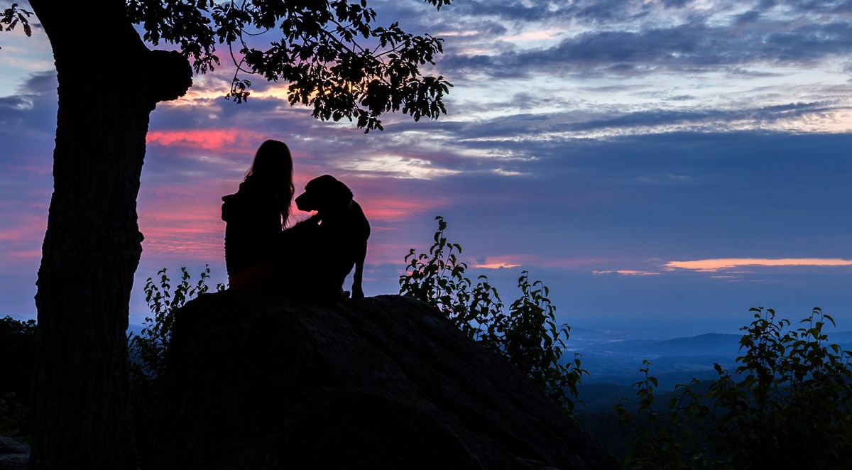 A girl and dog silhouetted sitting on a rock next to a tree looking out to a view.