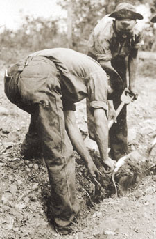 Historic photo of CCC workers planting a tree.