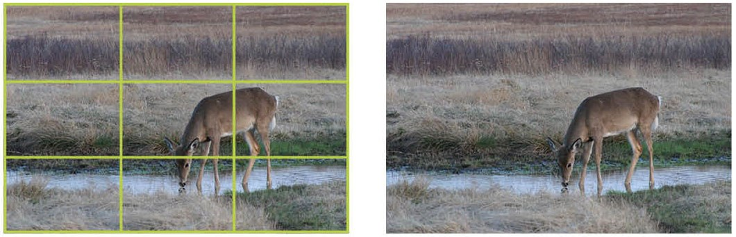 Two images of a deer, one with a grid layer demonstrating the photographic rule of thirds.