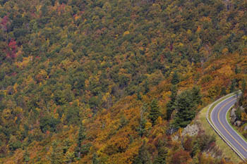 Many different color trees leaves changing on Skyline Drive.