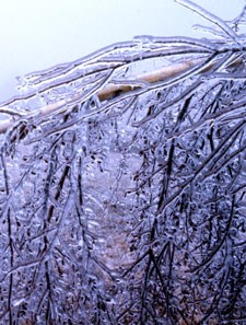 Ice storms leave behind a magical world of scenery and often a path of destruction.