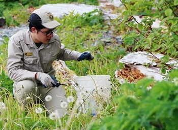 Photo of a person removing invasive plants and placing them in a white bucket, while kneeling in small vegetation.