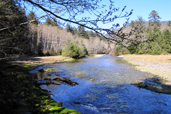 Looking upstream along Indian River, with shallow rocky shoreline on both sides, lined with green spruce and hemlock and leaf-bare alder.