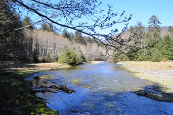 Indian River on a sunny day, with spruce, hemlock and leaf-bare alder growing along both banks of the river.