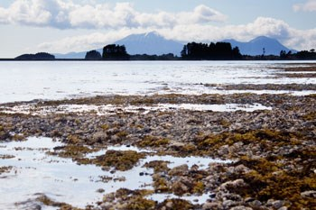 Cloud covered mountains in the far background, calm ocean mid-ground and rocky tidal flats with seaweed, mussels and barnacles in the foreground.