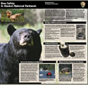 Image of the bear safety brochure