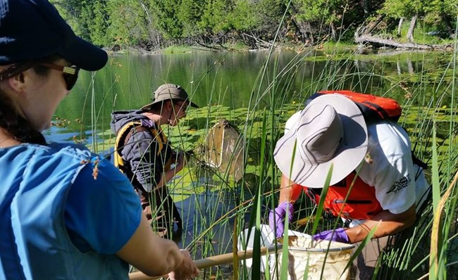 Educators use nets to search for dragonfly larvae in the plants and mud on the bottom of Bass Lake