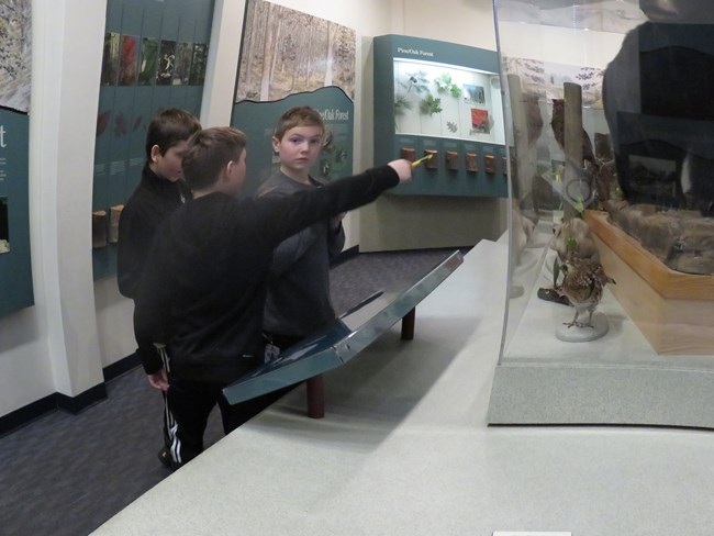 Three boys find animals in the visitor center display cases