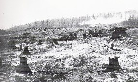 Clear-cut Logging