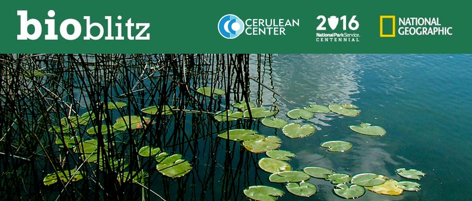 BioBlitz graphic of Bass Lake lillies