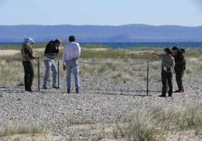 Fencing to protect Piping Plover
