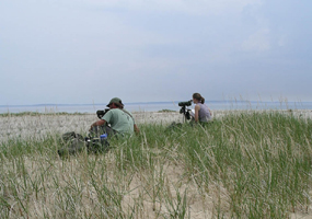 Observing Piping Plovers