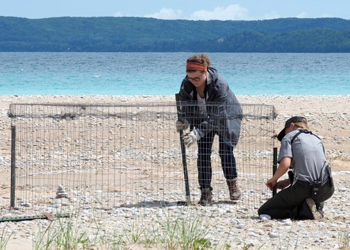 Two NPS staff building a plover exclosure on the beach