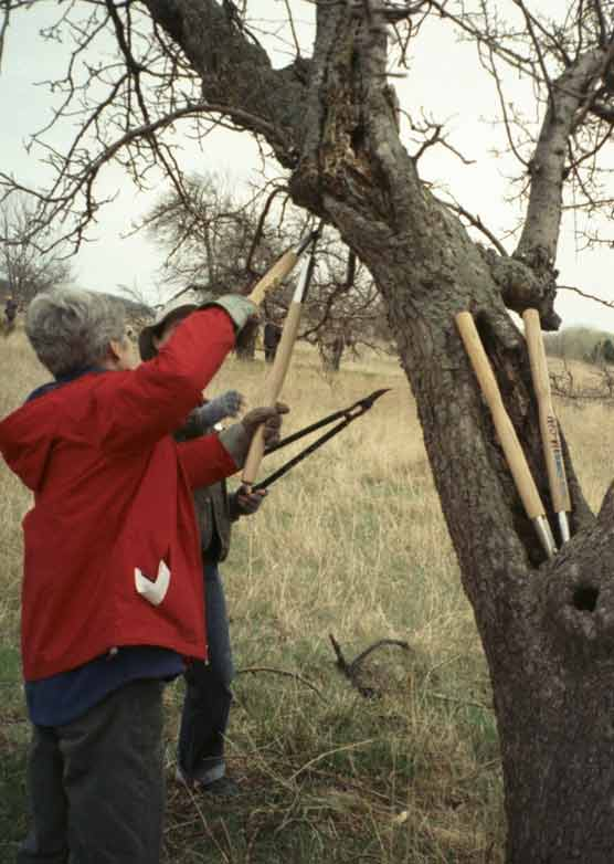 Apple and Pear Tree Pruning Workshop.