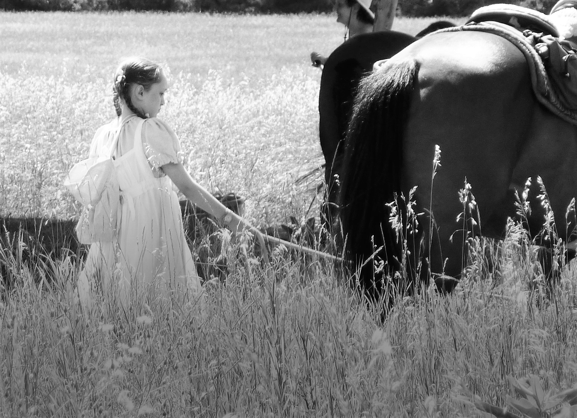 Young girl tends to horses in field