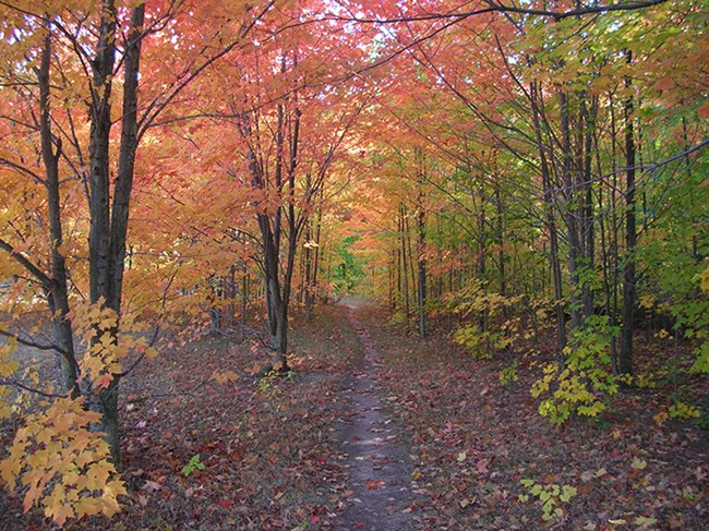 Hiking trail winding through fall-colored trees.