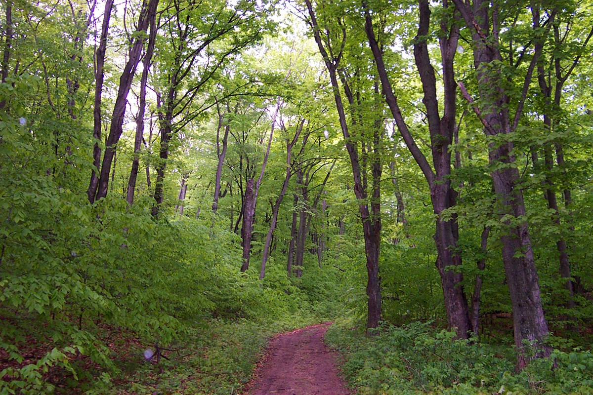 A narrow dirt trail makes its way through a green forest