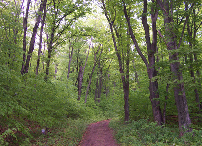 Typical Hiking Trail on North Manitou Island