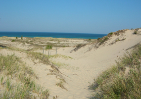 Beach Dunes to Lake MI