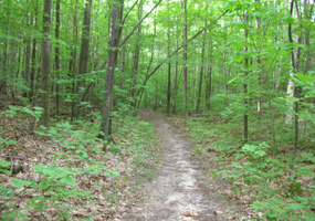 Shauger Hill Trail